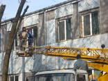 Спиливание дерьвьев Киев - фото 2