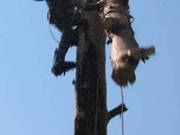Спиливание дерьвьев Киев - фото 7