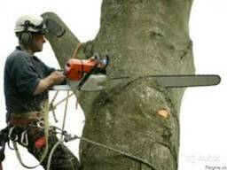 Спиливание и подрезка деревьев.Землекопные работы: котлованы