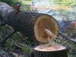 Спиливание - Обрезка деревьев, Обрезка сада. Автовишка 18-22 - фото 1