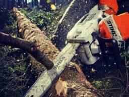 Спиливание и подрезка деревьев. Николаев