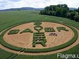 Средства защиты растений от компании Bayer (Байер) Каталог