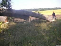 Срезание деревьев - фото 2