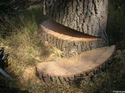 Срезание деревьев - фото 3