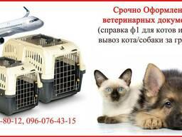 Срочно Оформление ветеринарных документов от 1 дня для котов