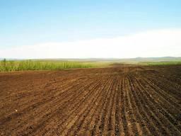 Срочно продам действующие сельское хозяйство в Черкасской об