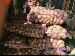 Срочно продам картофель