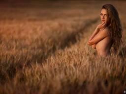 Срочно Пшеницу любых классов 6, 5, 3, 2.