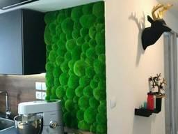 Стена из стабилизированого мха MiNature Moss вертикальное озеленение кочковый мох
