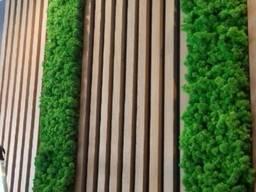 Стена из стабилизированого мха Ягель вертикальное озеленение мхом и растениями MiNature Mo
