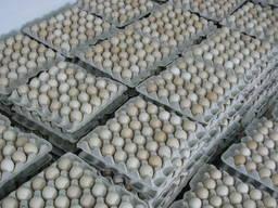 Столове (товарне) яйце