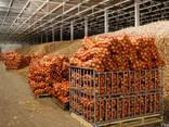 Строительство ангаров,складов,овочехранилищ, - фото 2