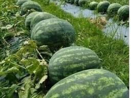 Фрукты, сухофрукты, овощи, веники из Узбекистана