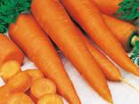 Сушеные овощи и зелень от производителя ! - фото 5