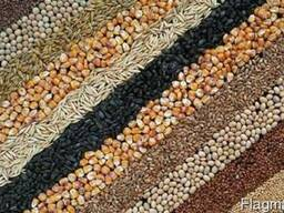 Сушка зерна. Сушка масличных и бобовых культур.