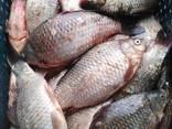 Свежая живая рыба - фото 1