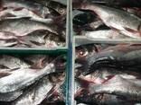 Свежемороженная и охлажденная речная рыба - фото 4