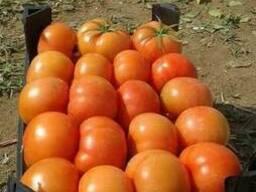 Свежий томат