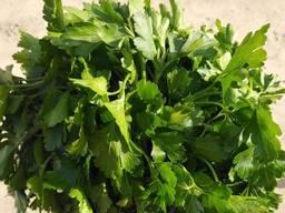 Свіжа зелень - укроп , петрушка