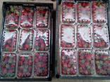 Теплица с подвижными лотками для выращивания клубники - фото 4