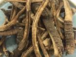 Тирлич , корінь тирличу, тирлич жовтий, горечавка - фото 4