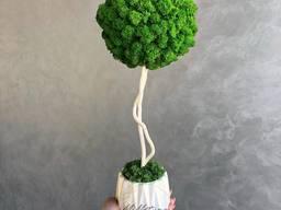 Топіарій (дерево з стабілізованого моху )