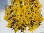 Топинамбур корень, земляная груша - фото 3