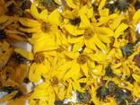 Топинамбур корень, земляная груша - фото 4