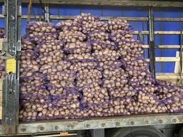 Товарный картофель
