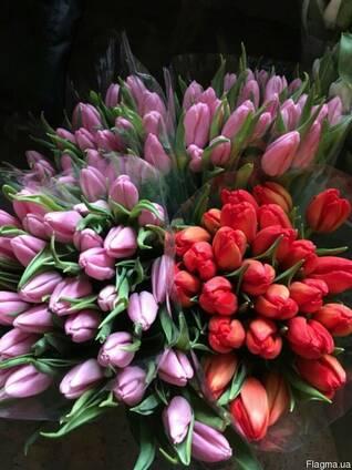 Тюльпан Польща Якість ( всі кольори)