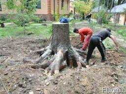 Уберем участок огород сад спиливаем дерево