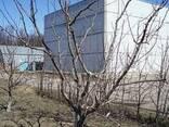 Уборка деревьев .Удаление корчевка пней - фото 3