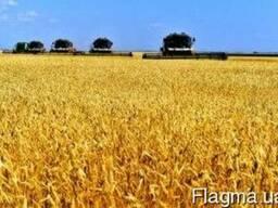 Уборка урожая зерновых рапса подсолнуха кукурузы сои услуги