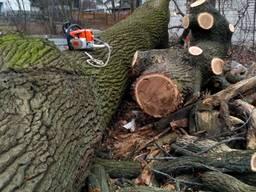 Удаление деревьев, удаление вырезка леса