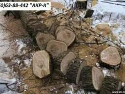 Удаление деревьев киев, спилить дерево Киев