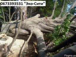 Удаление деревьев Киев. Спилить деревья на участке.