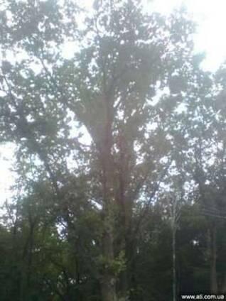 Удаление деревьев киевская область