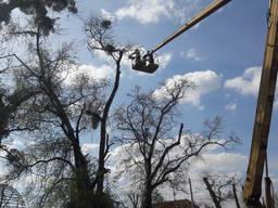 Удаление деревьев пней. вырубка кустов зарослей, вывоз веток