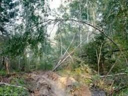 Розчистка участка, спил деревьев, вивоз мусора, корчевание пней