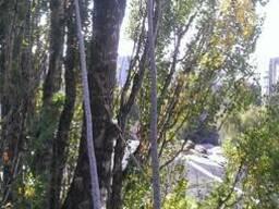 Удаление деревьев, Спилить дерево, киев, чистка участков