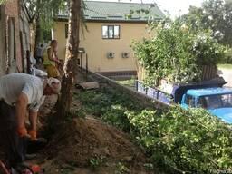 Удаление деревьев, спиливание деревьев