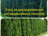 Удаление деревьев, уборка территории, благоустройство и озеленение - фото 2