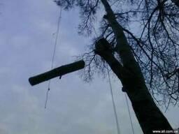 Удаление, кронирование, резка, валка, снос деревьев киев