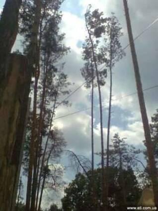 Удаление, обрезка деревьев, спилить дерево киевская область