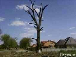 Удаление - обрезка деревьев. Вышгород. Обрезка сада.