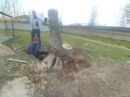 Удаление пней Киев. Удаление корней. Корчевание пня Киев.