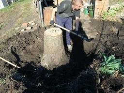 Удалить дерево харьков