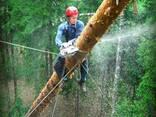Удоление аварийных деревьев в Одессе и Облости - фото 1