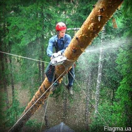 Удоление аварийных деревьев в Одессе и Облости