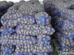 Укладемо договір на поставку картоплі (1 і 2 сорт)